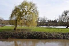 Деревья и река стоковые фотографии rf