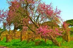 Деревья и руины Стоковые Изображения