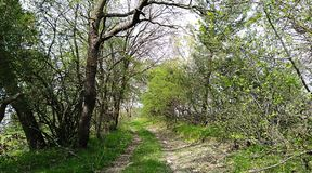 Деревья и свежая трава стоковое фото