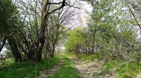Деревья и свежая трава стоковые изображения rf