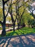 Деревья и солнце освещают в парке gorky в Москве Стоковая Фотография RF