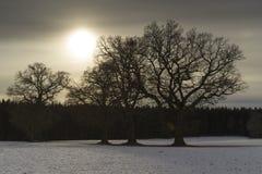 Деревья и солнце Стоковое Изображение