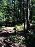 Деревья и следы Стоковая Фотография