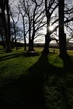 Деревья и тени Стоковая Фотография RF