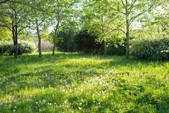 Деревья и трава в задворк Стоковое Фото