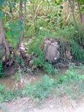 Деревья и трава на банке runnel Стоковое Изображение