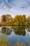Деревья и травы осени отразили в воде спокойного пруда на заходе солнца стоковое фото rf