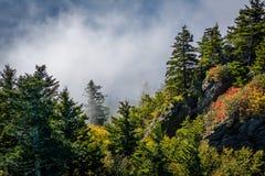 Деревья и туман осветили по солнцу, на горе деда, n стоковые фотографии rf