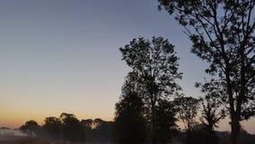 Деревья и туман стоковое изображение rf