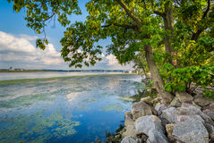 Деревья и утесы вдоль Потомака, в Александрии, Вирджиния Стоковая Фотография RF