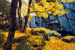 Деревья и утесы осени Стоковые Фото