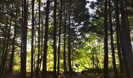 Деревья йоги Стоковые Фотографии RF