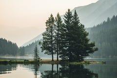 Деревья кедра с отражениями вдоль озера 2 Джек в Banff Стоковые Фотографии RF