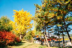 Деревья клена осени и корейский традиционный дом на крепости Namhansanseong в Корее стоковые фото