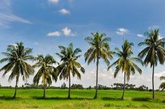 Деревья кокоса стоковые изображения rf