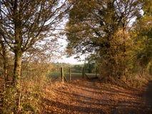Деревья красивых золотых горизонтальных лист осени пути золотые Стоковое Фото