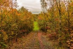 Деревья красочного леса осени стоковое фото