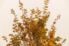 Деревья красочной осени стоковое изображение