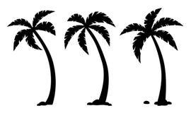 Деревья ладони тропические Установите черных силуэтов иллюстрация штока