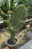 Деревья листья растут, трескать молодые и цветут в саде стоковые изображения