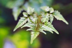 Деревья листья растут, трескать молодые и цветут в саде стоковые изображения rf