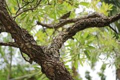 Деревья листья растут, трескать молодые и цветут в саде стоковая фотография rf