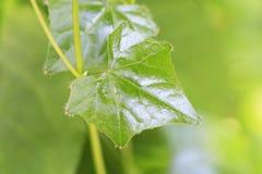 Деревья листья растут, трескать молодые и цветут в саде стоковое изображение
