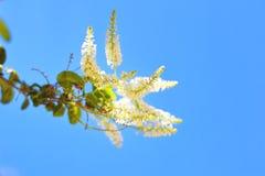 Деревья листья растут, трескать молодые и цветут в саде стоковое фото rf