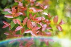 Деревья листья растут, трескать молодые и цветут в саде стоковое фото