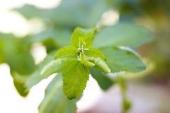 Деревья листья растут, трескать молодые и цветут в саде стоковая фотография