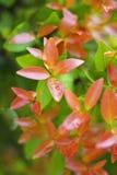 Деревья листья растут, трескать молодые и цветут в саде стоковые фото