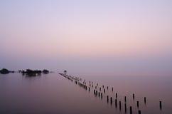 Деревья мангровы в море Стоковое Изображение