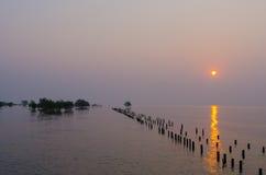 Деревья мангровы в море Стоковое фото RF