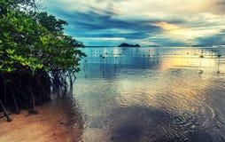 Деревья мангровы растут из воды Красивое яркое шикарное стоковое изображение