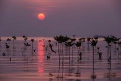 Деревья мангровы Стоковые Фотографии RF