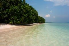 Деревья мангровы Стоковое Изображение