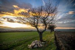Деревья между полями Стоковые Фото