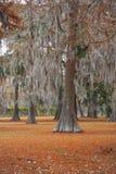 Деревья 1 мха Стоковые Изображения