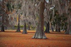 Деревья 1 мха Стоковое Фото