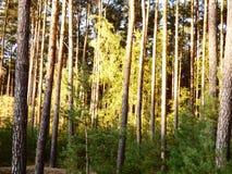 Деревья нагревают в солнце осени стоковые изображения rf