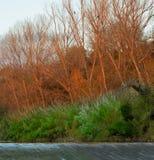 Деревья накаляя в заходящем солнце стоковые изображения