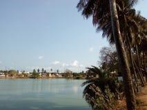 Деревья на банке озера Стоковое Фото