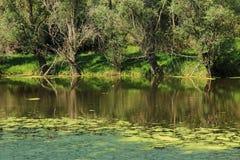 Деревья на банке пруда Стоковые Фото