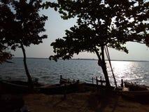 Деревья на банке реки Godavari Стоковая Фотография RF
