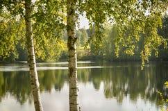 Деревья на береге Стоковая Фотография