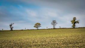 Деревья на вершине холма в зиме Стоковые Изображения RF