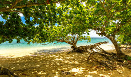 Деревья на гаваиском пляже Стоковое Фото