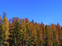 Деревья на голубой яркой предпосылке неба Стоковые Изображения
