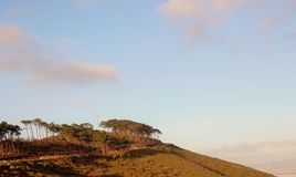 Деревья на горе в Кейптауне Стоковое фото RF