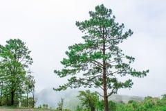 Деревья на горе Стоковая Фотография